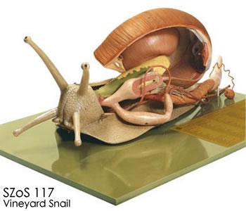 カタツムリの画像 p1_33